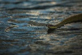 Travessia no rio Juruena. Foto: Thiago Foresti.