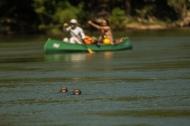 Canoagem no rio Juruena. Foto: Thiago Foresti.