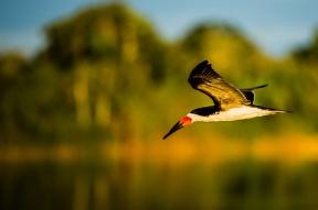 Liberdade no rio Juruena. Foto: Thiago Foresti.