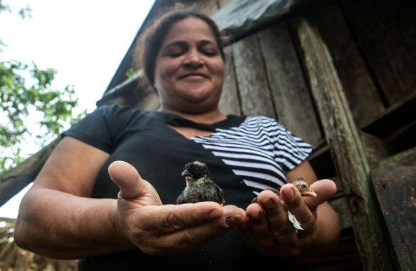 Osvalinda exibe sua criação de galinhas no quintal do sítio. Apesar das ameças, ela não pretende deixar o lugar. Foto: Lilo Clareto/Repórter Brasil
